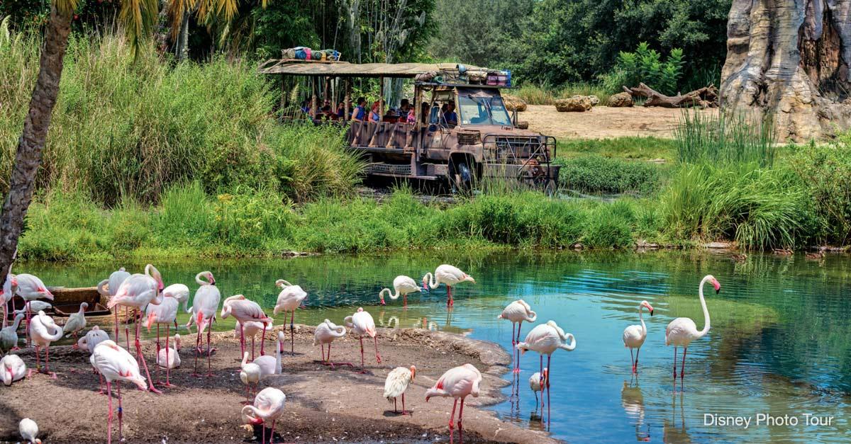 Kilamanjaro Safaris