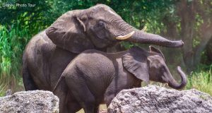 Animal Kingdom Elephants