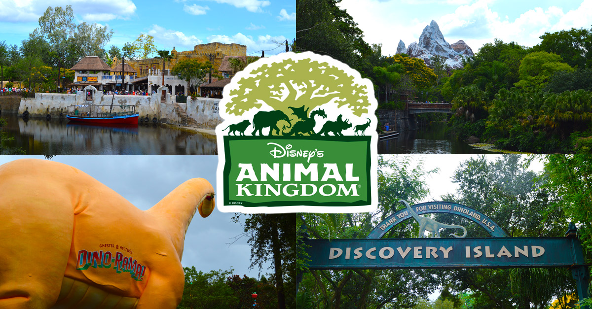Animal Kingdom Montage